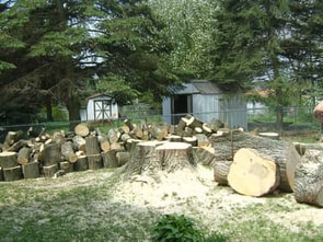 Stump removal service performed by licensed tree professional