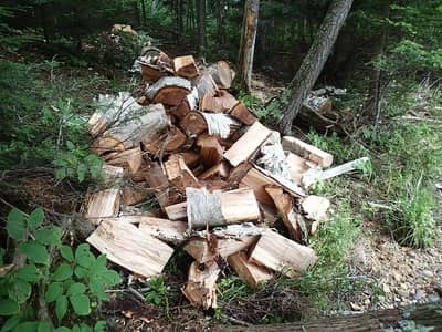 Tree stump removal service; tree stump removed cut into tree logs by licensed tree professional